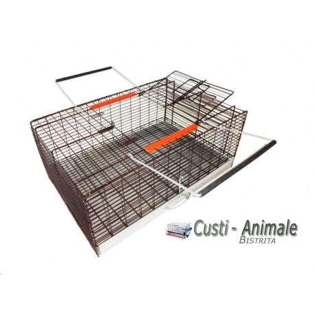 Cusca transport porumbei vopsita, MARO, 60x40x25 cm