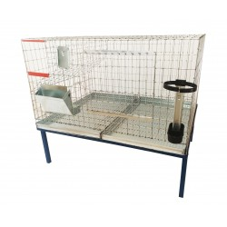 Cusca iepuri tineret (rasa uriasa) /100 cm