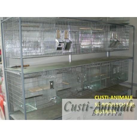 Cusca chinchilla reproductie 4 + 1